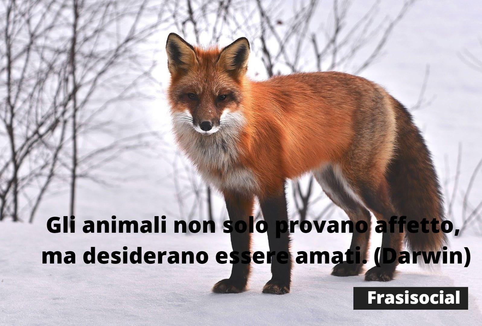 Frasi animali di Darwin