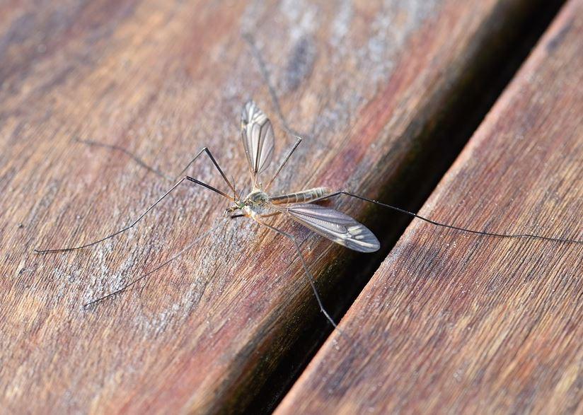 Frasi sulle zanzare